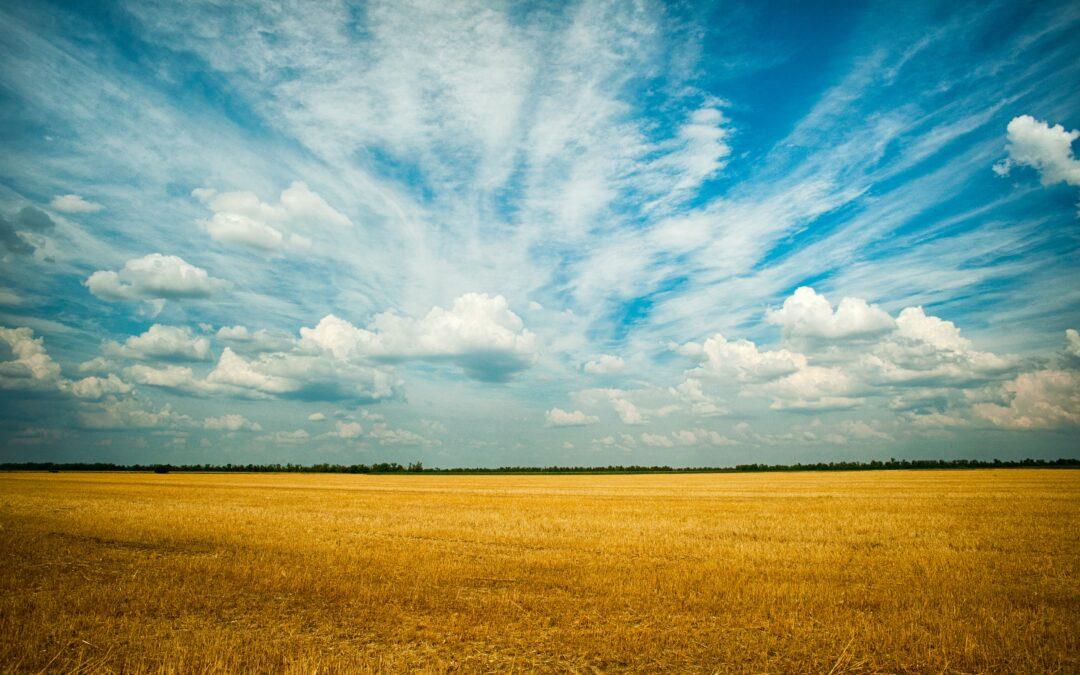 Subvenciones: destinadas a la promoción, al desarrollo y a la diversificación económica de los municipios rurales